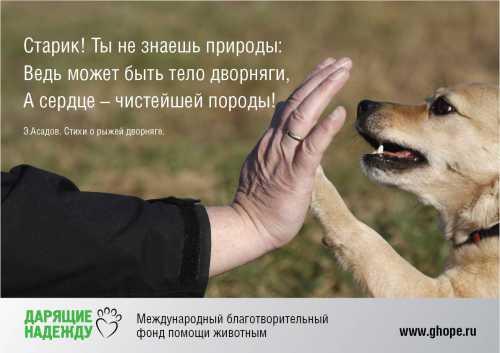 Цитаты и мысли: Дворовых собак