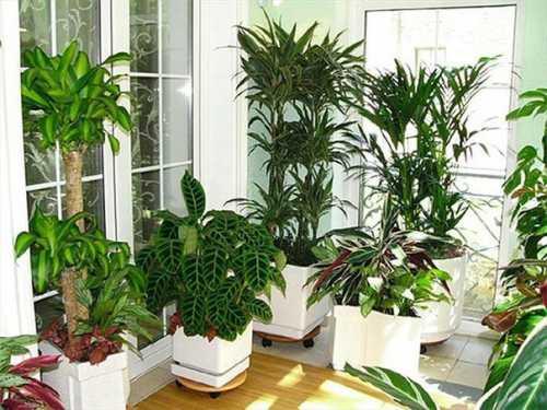 Комнатные растения для гармоничной жизни