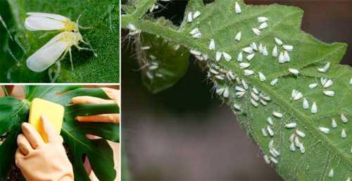 Вредители комнатных растений и как обезопасить