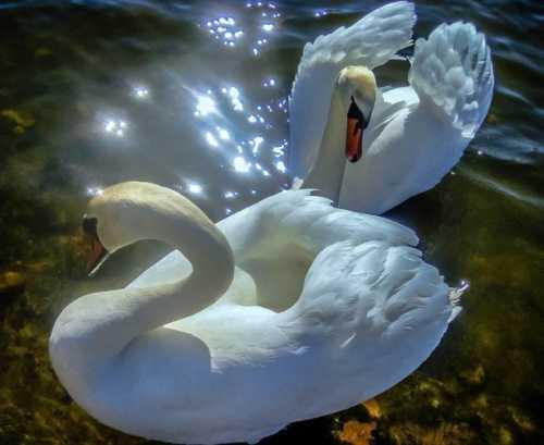 Чтобы в душу лебеди летели