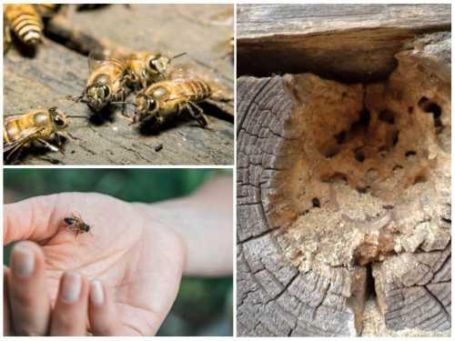Как избавиться от пчел