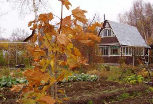 Основные работы на даче в начале осени