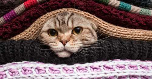 Шарф в котором живет кот