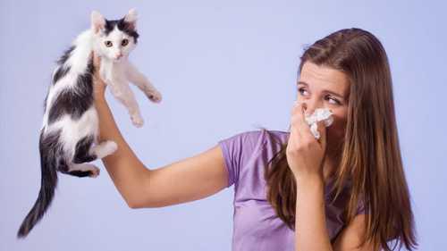 Домашние животные, не вызывающие аллергии
