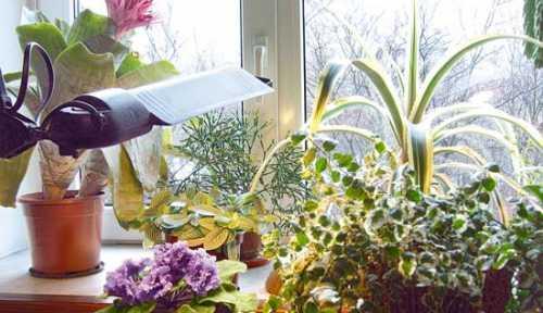 Зимний уход за домашними растениями