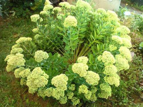 Растения, выращенные из семян, начинают цвести только через года