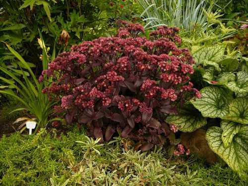 Эти части растения можно использовать в качестве черенков