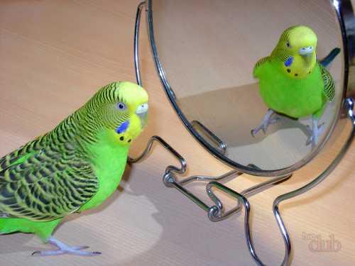 Выбираем попугая — когда ребенок хочет домашнего питомца