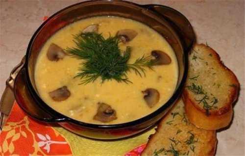 Рецепты сырного супа с грибами, секреты выбора