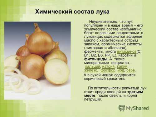 Рассказываем про лук, его калорийность и состав,