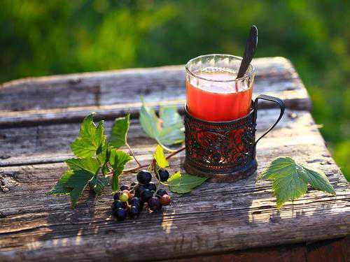 Польза и вред листьев чёрной смородины, чай из