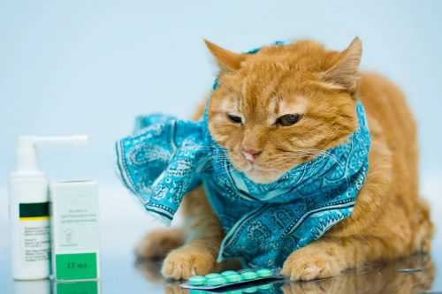 Как лечить больную кошку